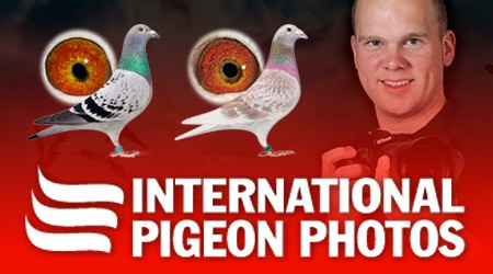 Internationale duivenfotografie